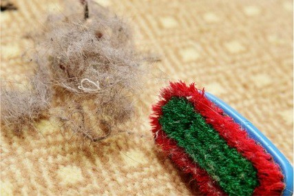 11 Tricks on How to Get Hair Out of Carpet