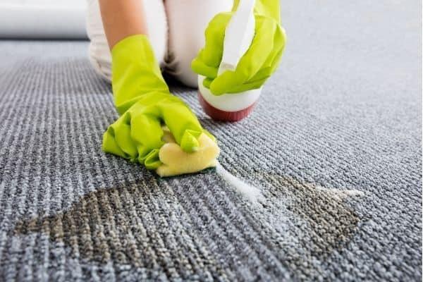 detergent on carpet urine stain 1