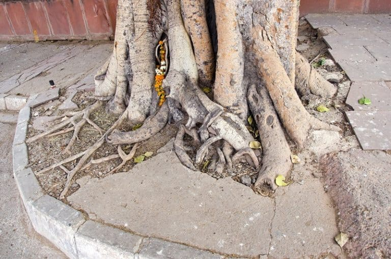 How to Cut Tree Roots Correctly in 8 Steps