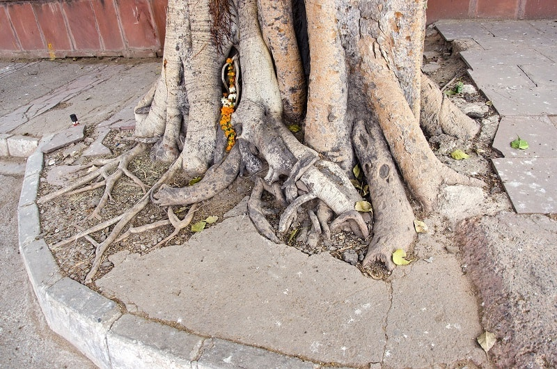 how to cut tree roots