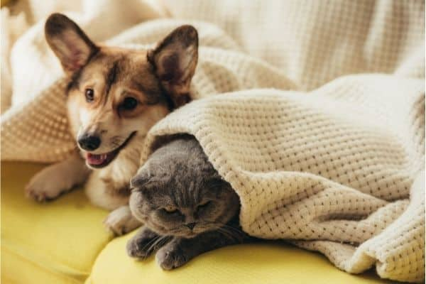 how to remove cat and dog smell from sofa
