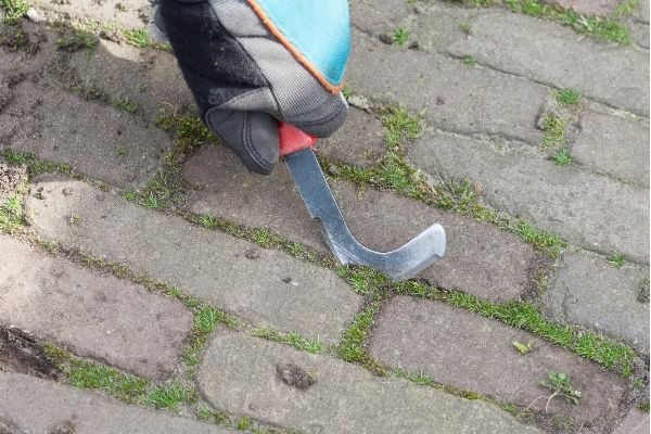 scraping moss off paver