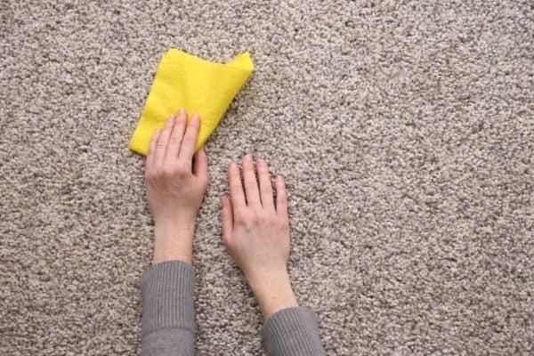 wipe urine on carpet 1