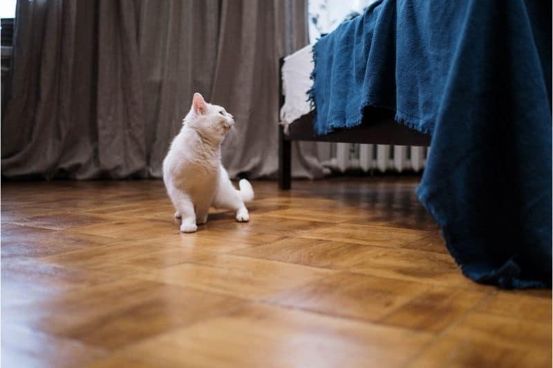 pet scratches hardwood floors