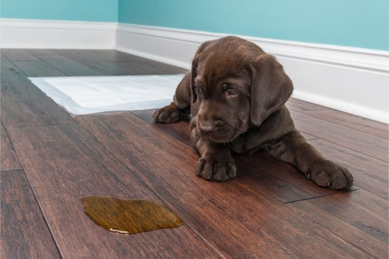 removing pet stain from wood floor