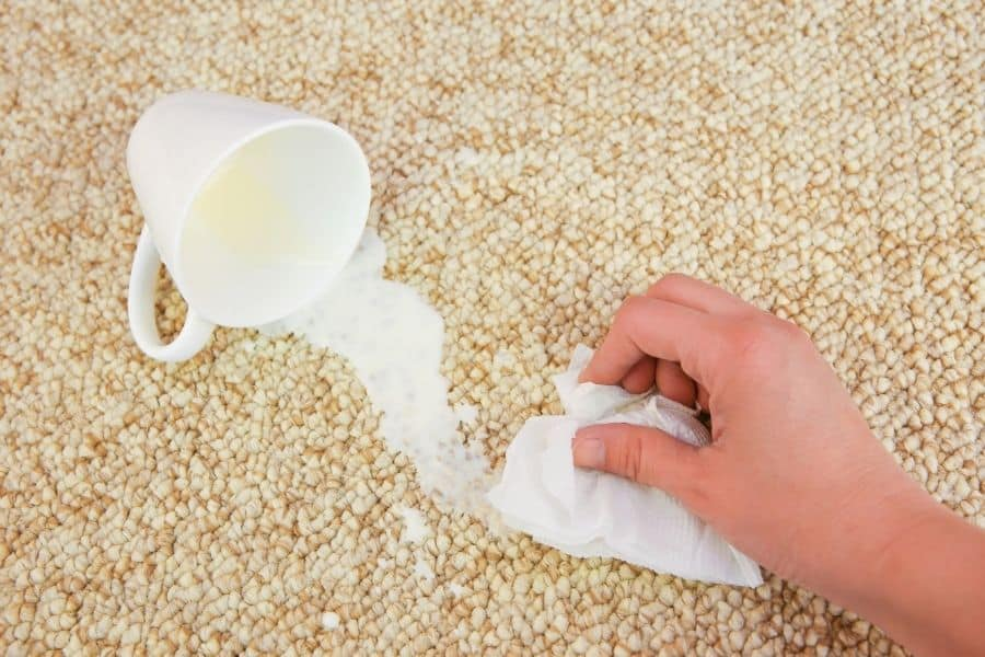 cleaning spilled milk on carpet