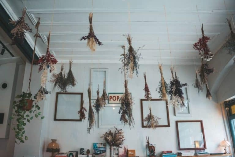 How to Hang a Plant from the Ceiling Without Drilling